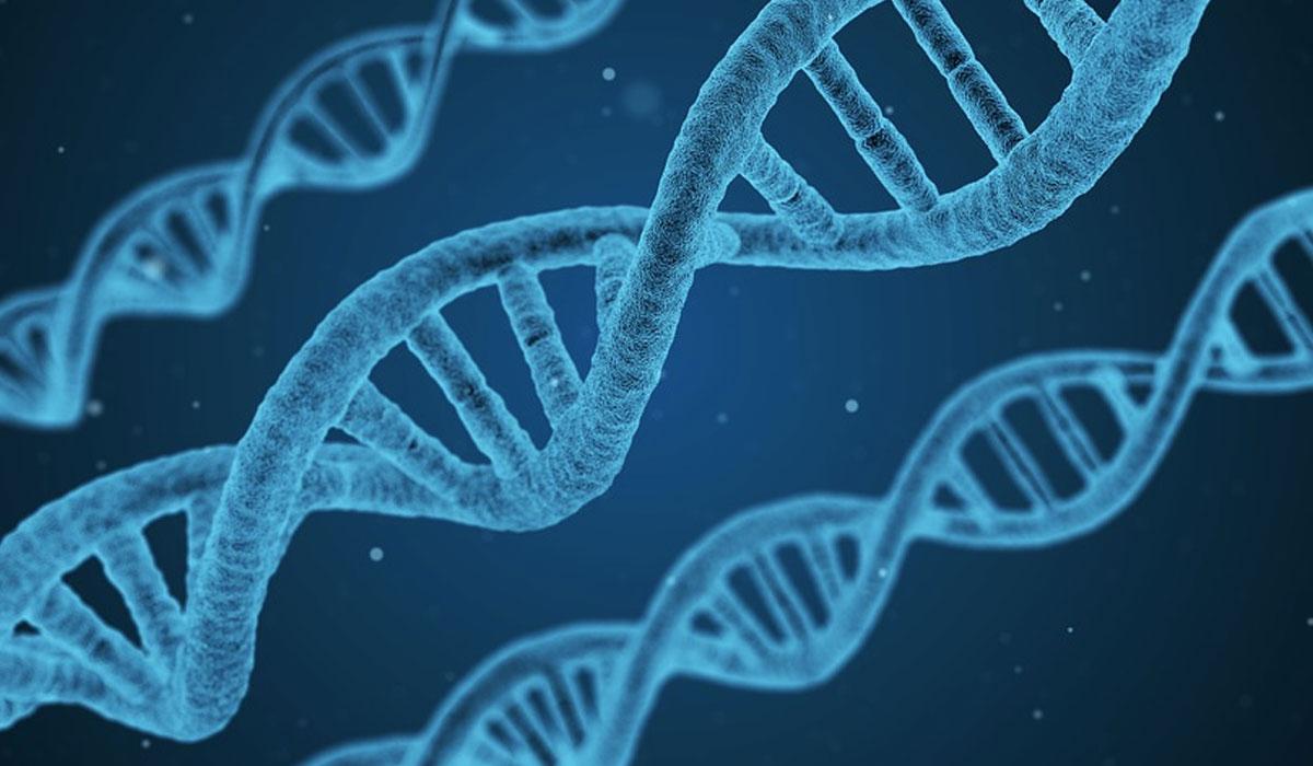 Gene patents